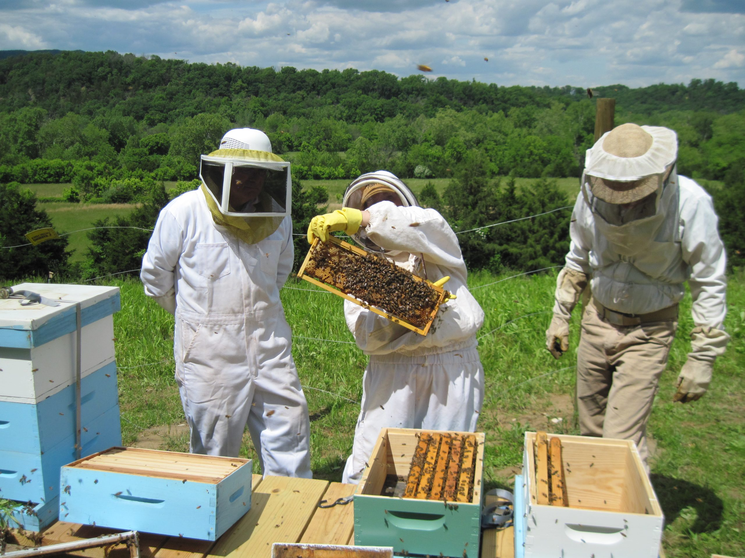 Three people working on bee hives